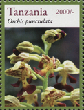 Orchids - Punctulata - Philately Tanzania stamps