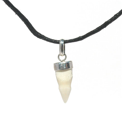 CROCODILE TOOTH PENDANT SET IN STERLING SILVER WITH BROWN COTTON NECKLACE: ADJUSTABLE IN LENGTH