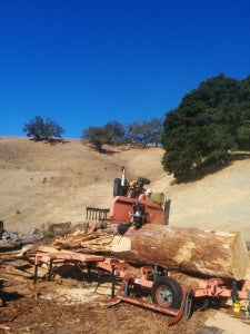 """Our first challenge, cutting down a 42"""" log in preparation for milling."""