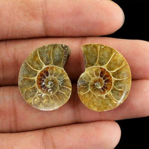 gemsmore:Genuine Ammonite Gemstone Pair