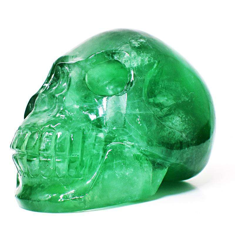 gemsmore:Hand Carved Green Fluorite Skull - Museum Size