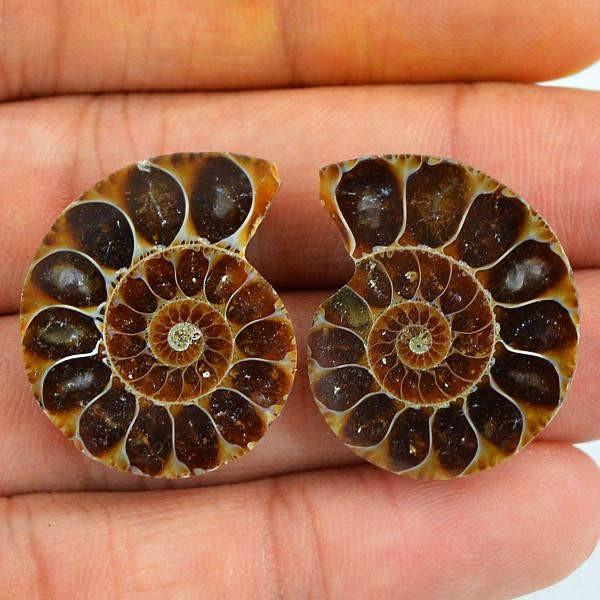 gemsmore:Natural Ammonite Unheated Gemstone Pair