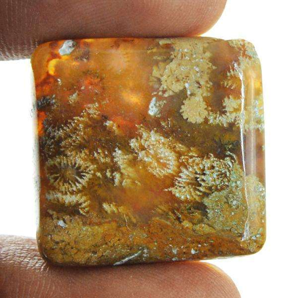gemsmore:Natural Coral Fossil Untreated Loose Gemstone