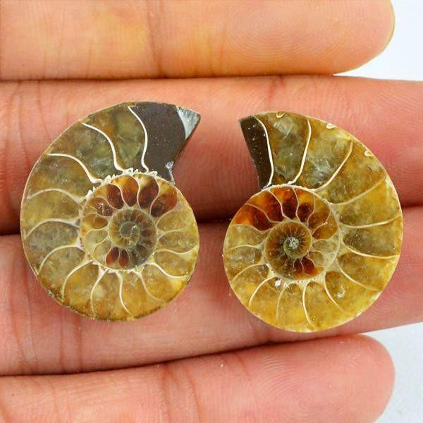 gemsmore:Natural Untreated Ammonite Gemstone Pair