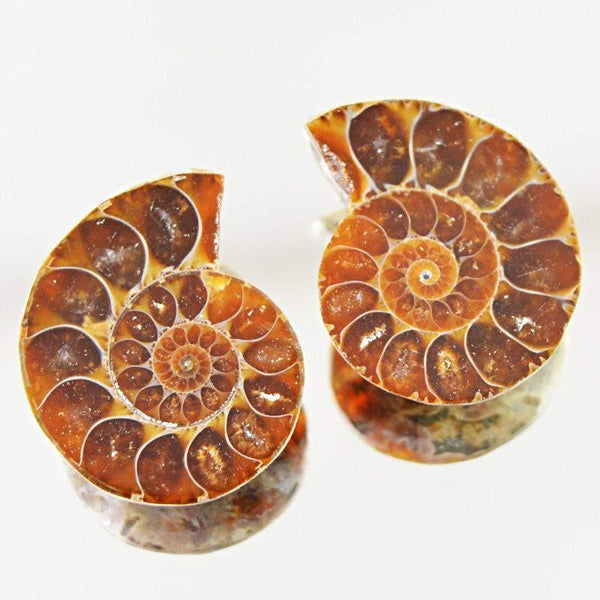 gemsmore:Natural Untreated Ammonite Loose Gemstone Pair