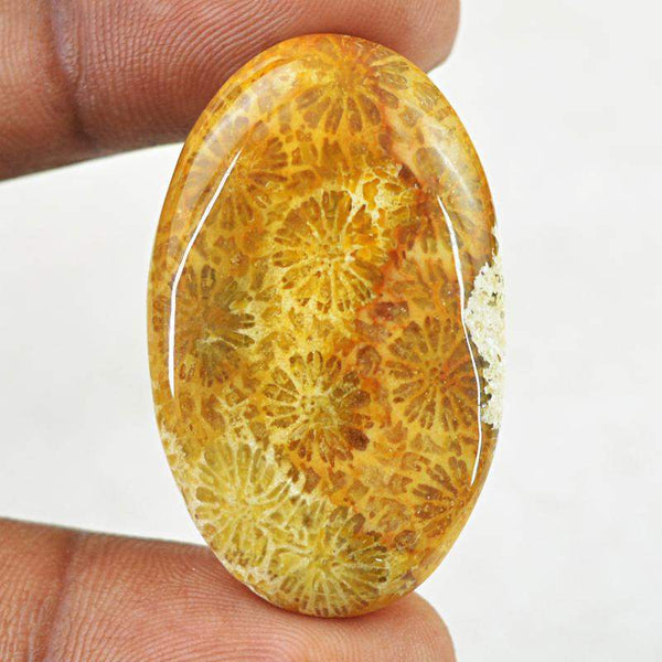gemsmore:Natural Untreated Coral Fossil Oval Shape Gemstone