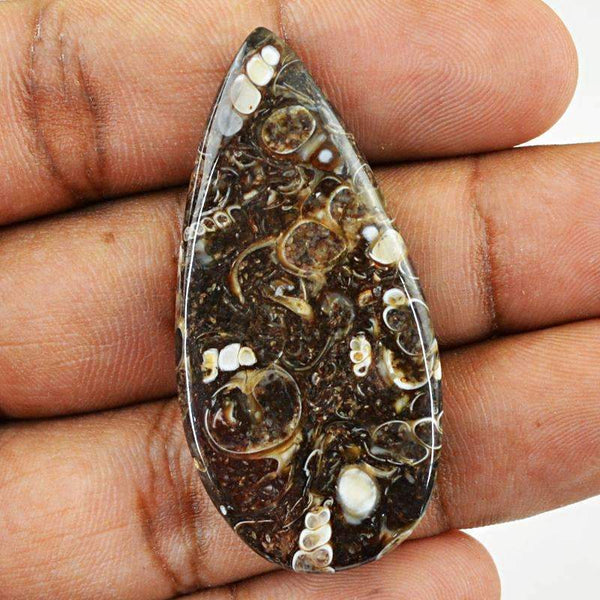 gemsmore:Pear Shape Crinoid Fossil Gemstone Natural Untreated