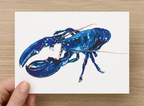 Blue Lobster Postcard
