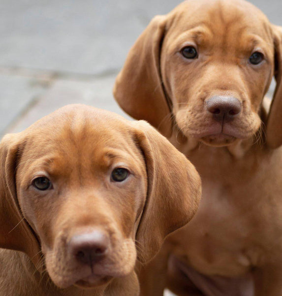 What's The Significance of Puppy Testing?  Shifting Your Lens For Better Results