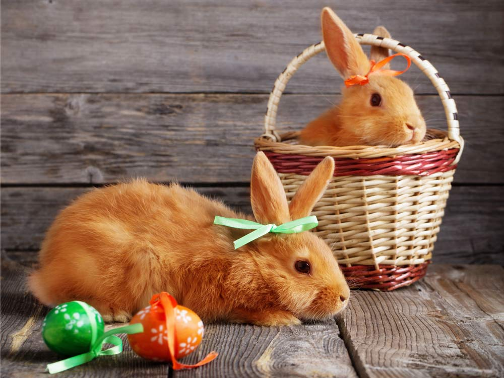 A hop, skip and a jump to find  your perfect Easter bunny