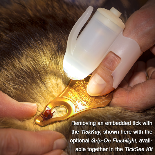 Removing an embedded tick with the TickKey, shown here with the optional Grip-On Flashlight, available together in the TickSee Kit