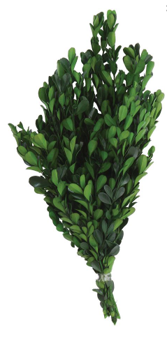 Dried Natural Boxwood
