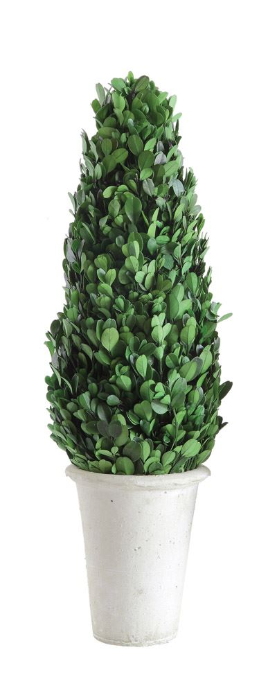 "Boxwood Cone Topiary 17""H"