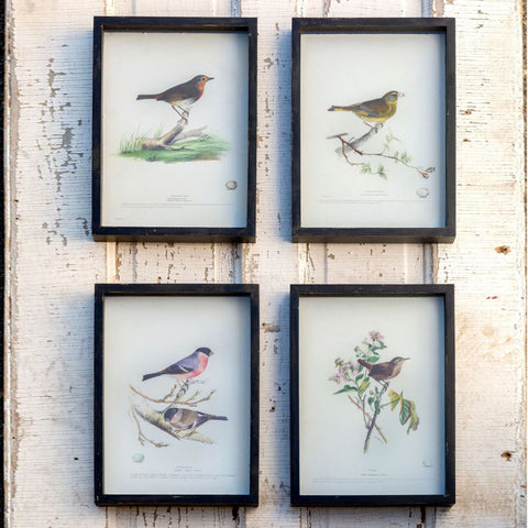Framed Bird Study Prints