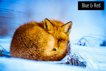 Luxe Winter Lightroom Presets - Blue & Red