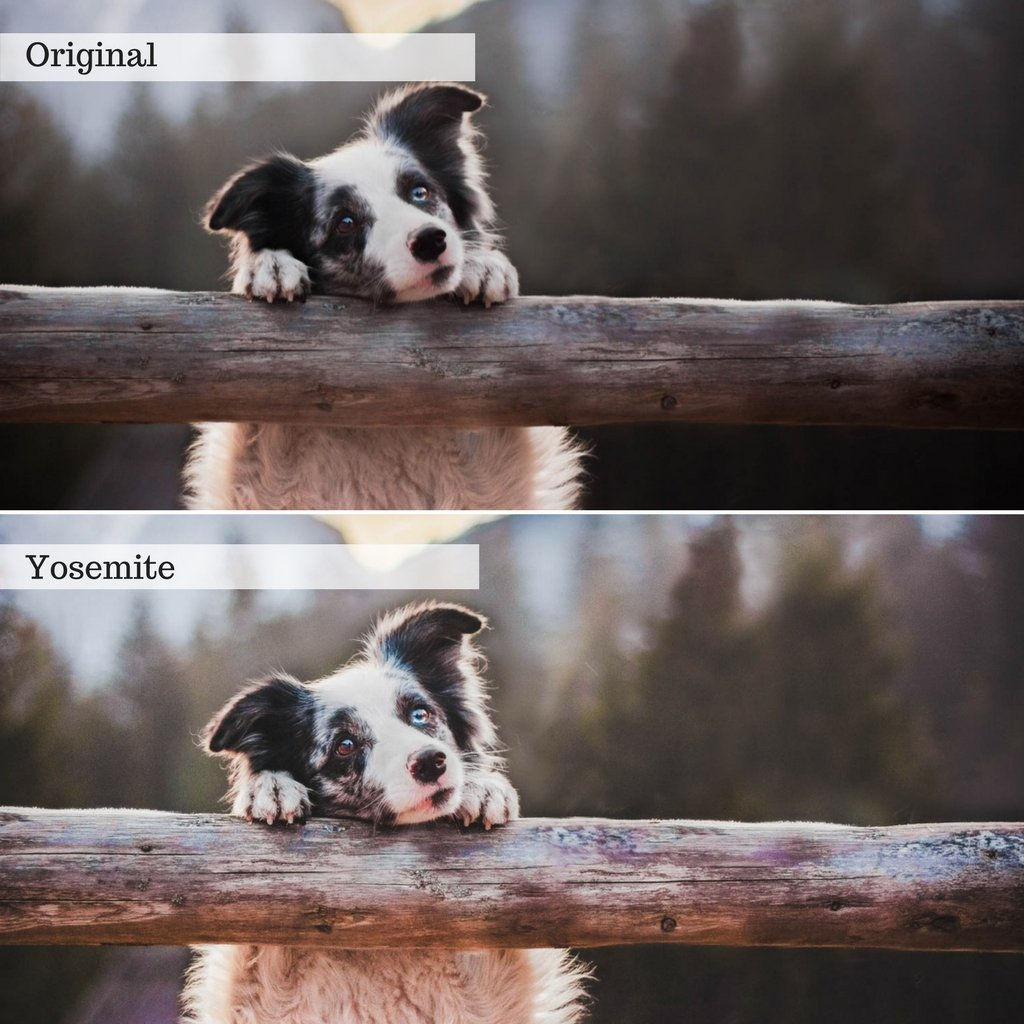Landscapes & Wildlife Lightroom Presets – Desktop & Mobile