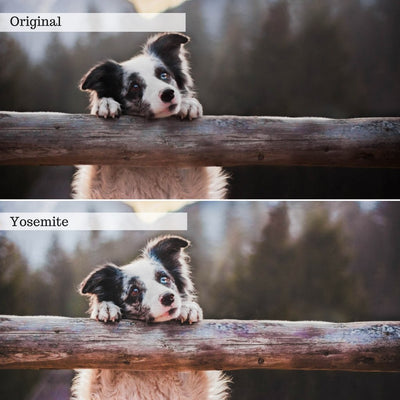 Landscapes & Wildlife Lightroom Presets