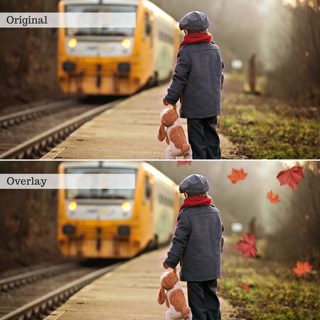 Leaf Overlays – Photoshop & More