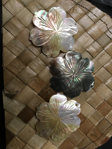 Mother of Pearl Blacklip Hibiscus Shell