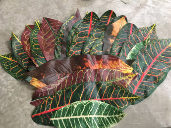 Artificial Croton Leaves