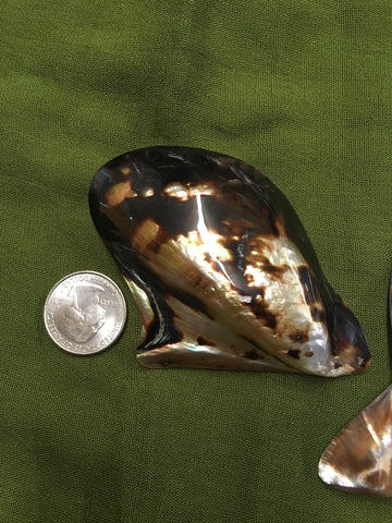 Mother of Pearl Polished Natural Shape Spotted Shell