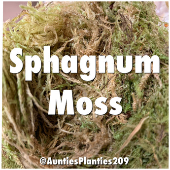 Auntie's Planties- Sphagnum Moss 2oz bag