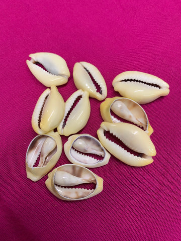 Large Cut Money (yellow) Cowry Shells