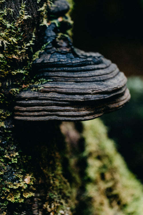 Tarkine Fungi I Photographic Print