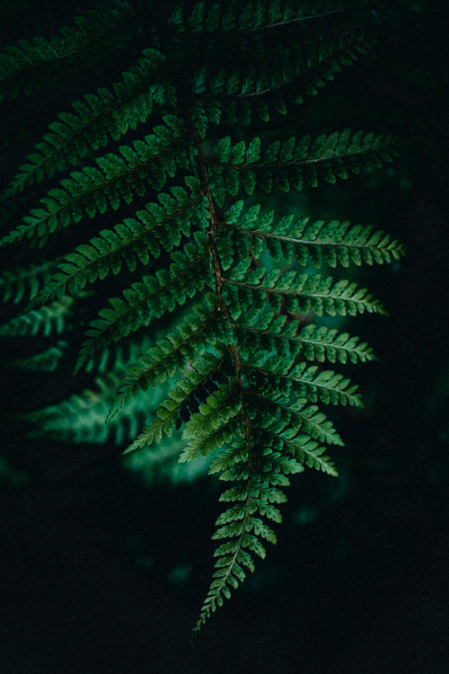 Soft Tree Fern Photographic Print