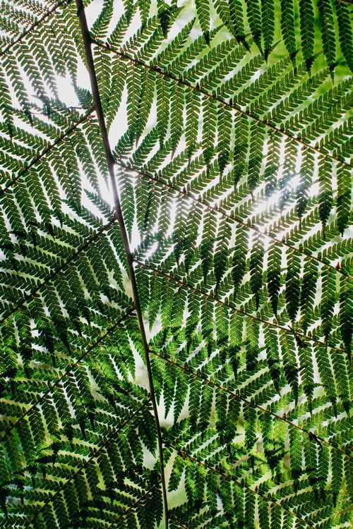 Beneath the Fern Photographic Print