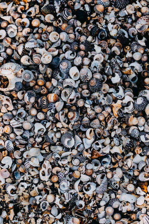 She Sells Sea Shells Photographic Print