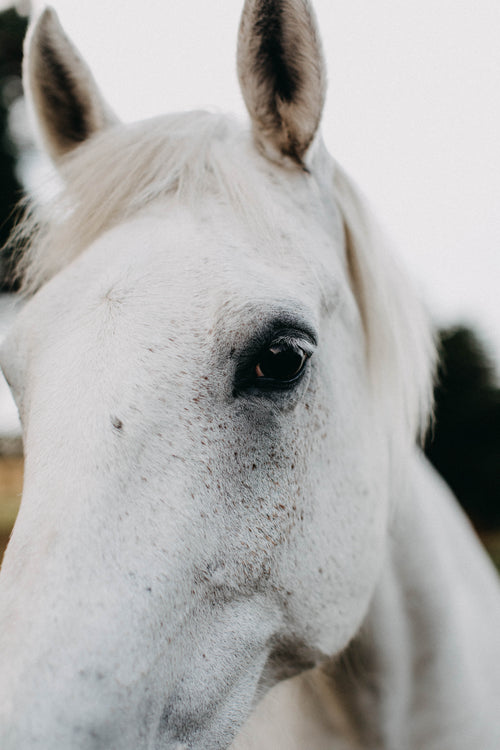 Arthur the White Horse Photographic Print