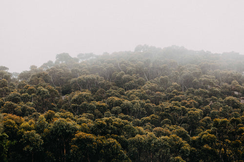 Wilsons Promontory Fog on the Tree Tops Photographic Print