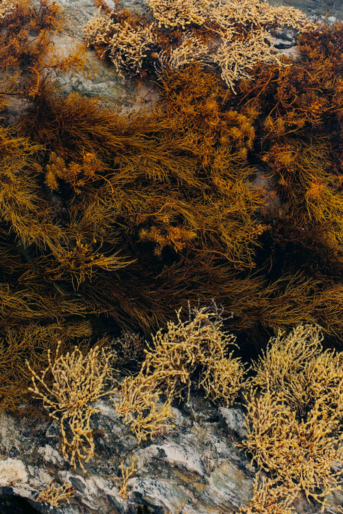 Tasmanian Intertidal Garden IV Photographic Print