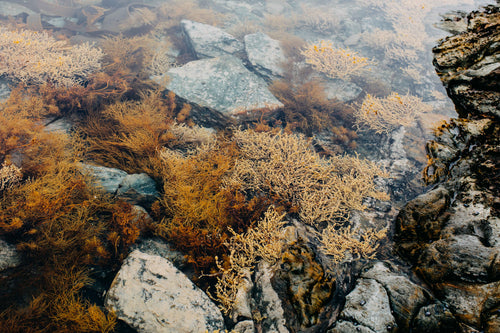 Tasmanian Intertidal Garden I Photographic Print