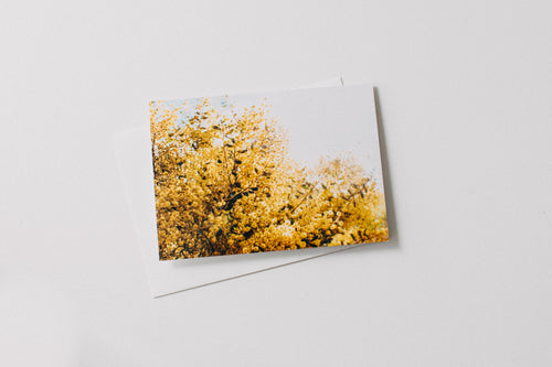 Australian Acacia Wattle Greeting Card