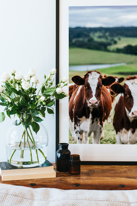 Betty and Beatrice Cow Photographic Print