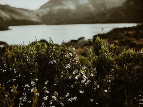 Cradle Mountain Vegetation Photographic Print