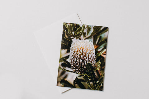Australian Serrata Banksia Greeting Card
