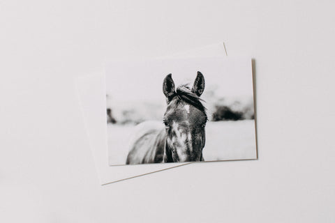 Harlow Horse Greeting Card