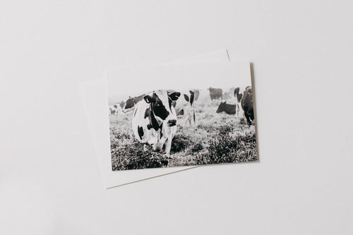 Duchess Dairy Cow Greeting Card