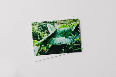 Elephant Ear Botanical Greeting Card