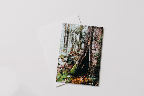 Tasmanian Rainforest II Greeting Card