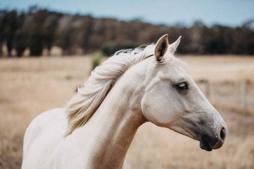 Winnie the White Horse Photographic Print