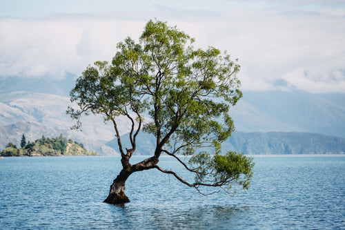 New Zealand Lake Wanaka Photographic Print