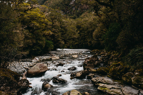 Highland Bush Creek Photographic Print