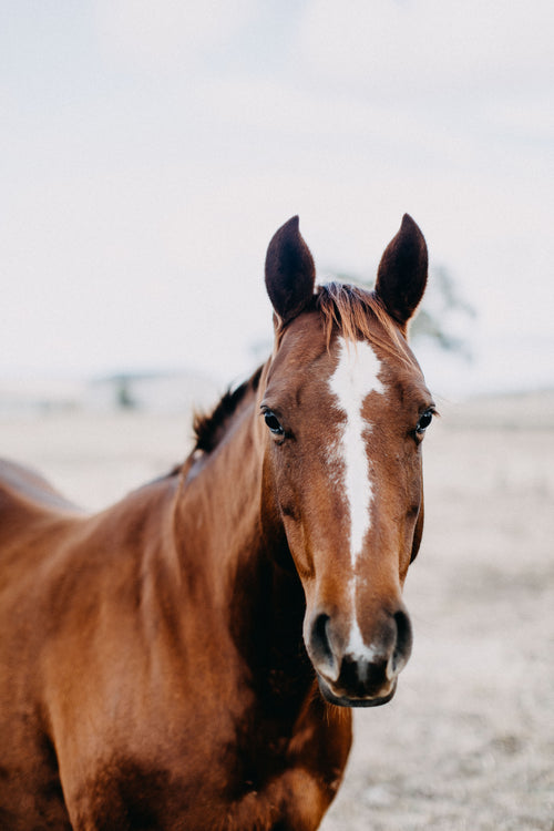 Coco the Horse II Photographic Print