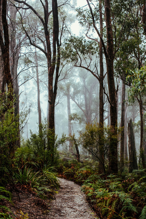 Tasmanian Rainforest Greeting Card