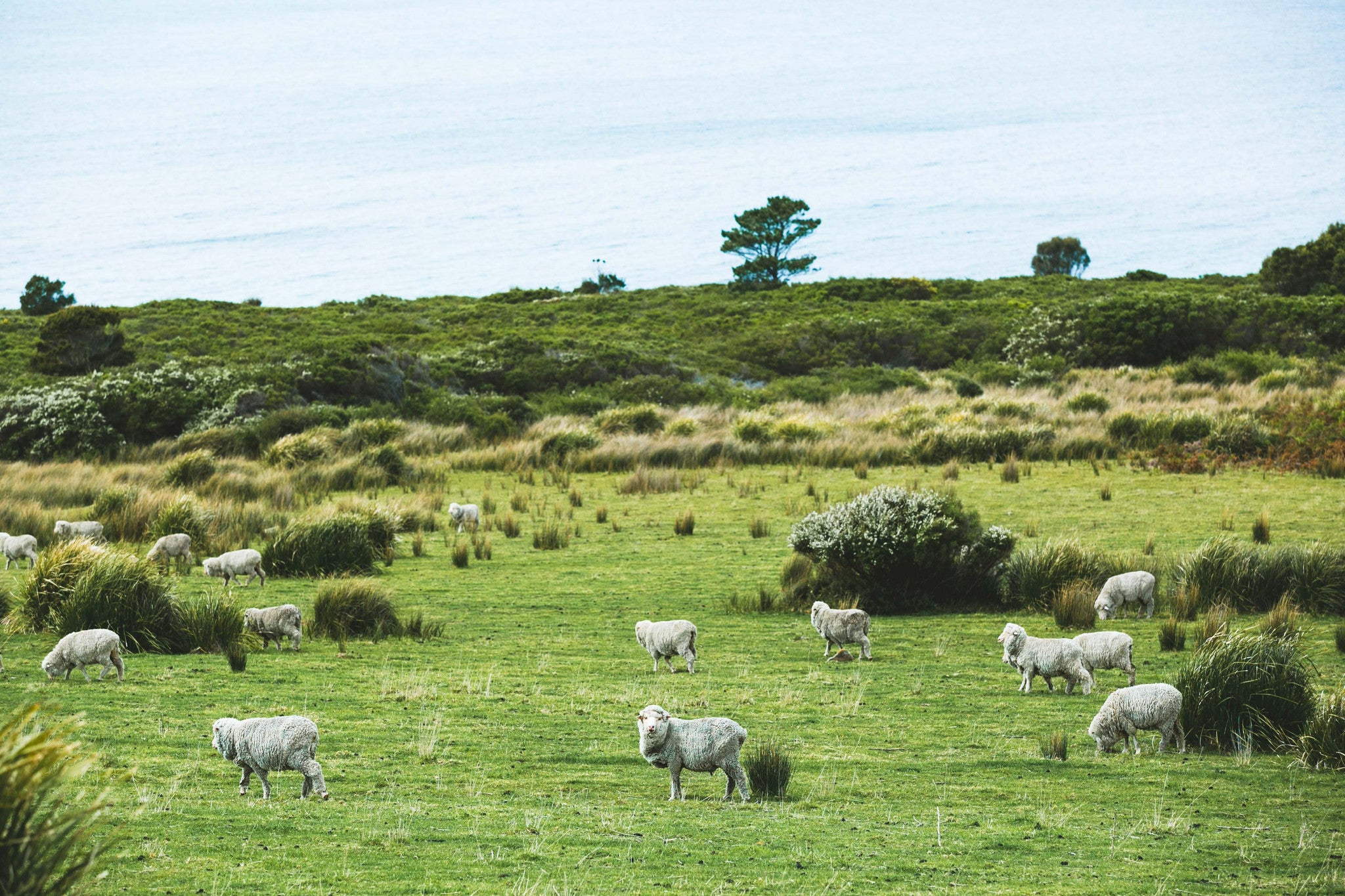 Sheep By The Waves III Photographic Print