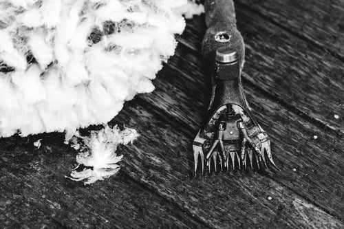 Shear the Sheep B+W Photographic Print